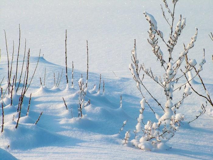 winter-1024x769